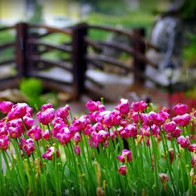 Flowers and bridge by Donat Piber - Landscapes Travel ( roses, bridge, flowers,  )
