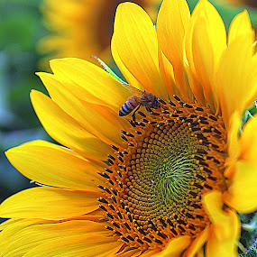 Welcome~ by Karen McKenzie McAdoo - Nature Up Close Flowers - 2011-2013