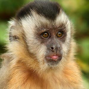 A very pretty monkey.jpg