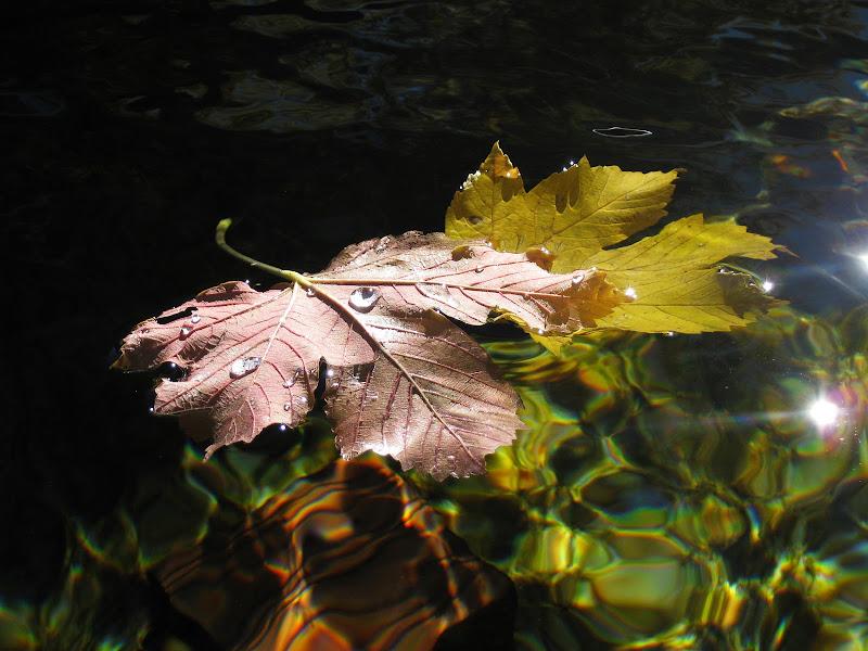 leggere nell'acqua di Elisabetta Castellano