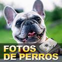 Fotos de perros icon