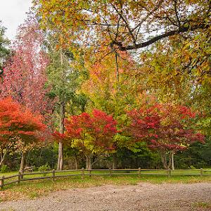 Arboretum 1.jpg