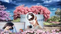 Nắng Có Còn Xuân – Nhạc Sống Organ