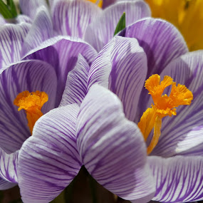 by Lauren DeJarnatt Yoder - Flowers Flowers in the Wild (  )