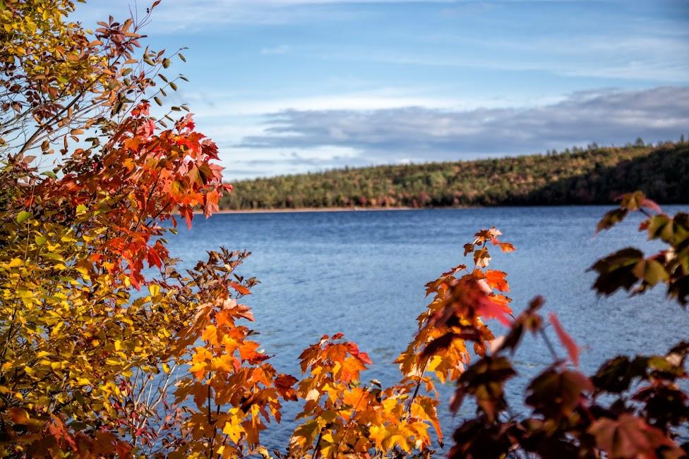 łosie, Cabot Trail, Park Narodowy Cape Breton Highlands, Nowa Szkocja, Kanada