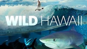 Wild Hawaii thumbnail