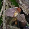 Moth and Wasp