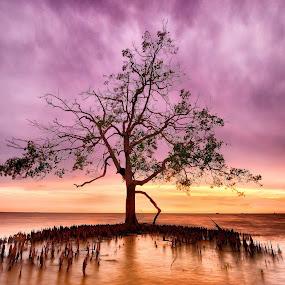 Tree Of Life by SyaFiq Sha'Rani - Landscapes Sunsets & Sunrises ( life, tree, sunset, mangrove, banting, coast )