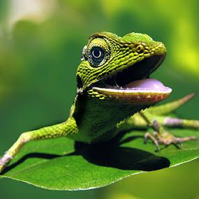 by 3 Joko - Animals Reptiles
