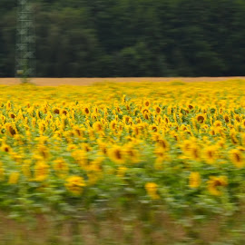 by Roseann Jech - Landscapes Prairies, Meadows & Fields ( flora polni, pixopend, krajina pole, relita )