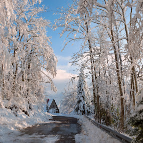 Wrapped in white by Andrija Vrcan - Landscapes Travel ( snow,  )