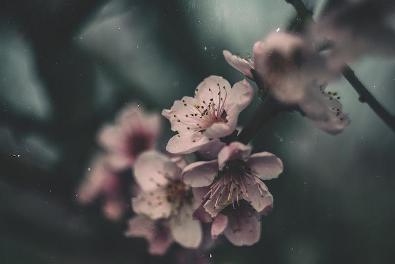 springtime di enricodot