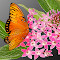 C:\Documents and Settings\Joe\My Documents\My Pictures\1Pixoto\NEW\Butterfly.jpg