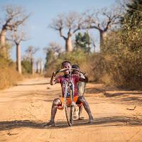 Fun among the baobabs di