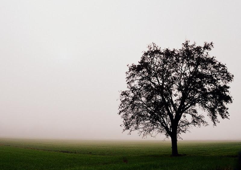 Albero solitario di ilgirasolesissi