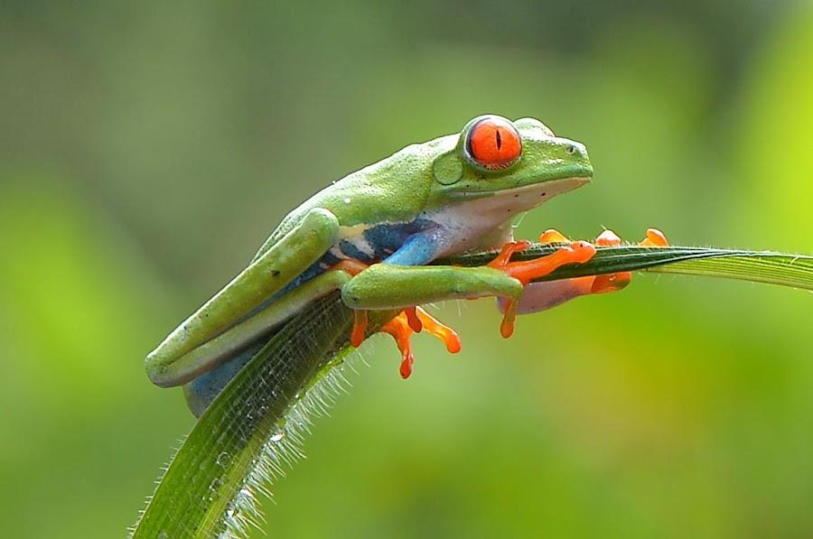 by Edah DJ-phonks - Animals Amphibians