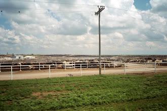Photo: Eine 8`000 Rinderfarm