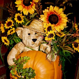 The bear in the pumpkin. by Peter DiMarco - Artistic Objects Other Objects ( artistic objects, art, artistic, bear, pumpkin )