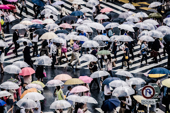 Photo: A sea of umbrealls cross the street in Shibuya, Tokyo