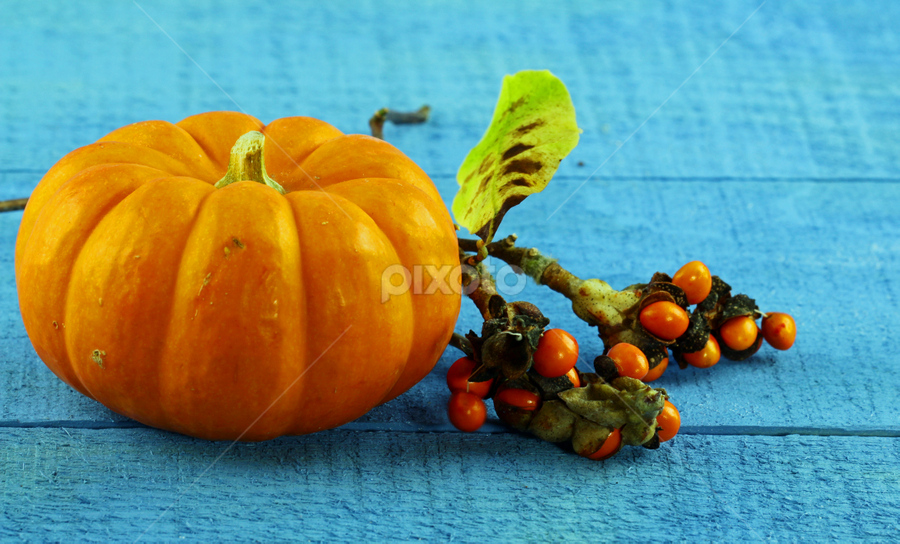 by Dipali S - Food & Drink Fruits & Vegetables ( seasonal, diet, yellow, vegetation, corn, halloween, farm, life, colourful, autumn, sunny, squash, orange, decorate, symbol, pumpkin, decoration, agriculture, indian, gourds, still, thanksgiving, delicious, farming, many, organic, market, red, season, background, fall, basket, ripe, healthy, summer, eat, harvest, vegetable, natural, outside, produce )