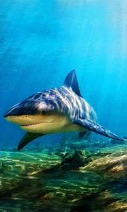 Sharks Sea LWP - náhled