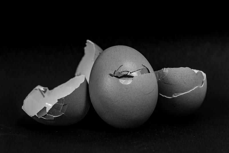 Fragilità delle uova. di Federica Tiziani