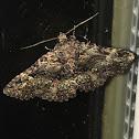 Common Fungus Moth