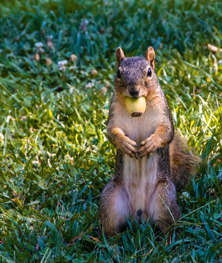 You Rang? by Jackie Eatinger - Animals Other Mammals (  )
