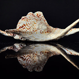 Seashell by Janette Ho - Abstract Patterns