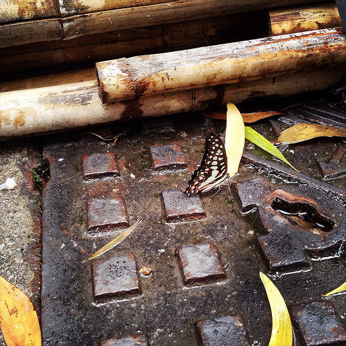 Hong Kong, Manhole, Cover, bamboo scaffolding, butterfly, 香港, 井蓋