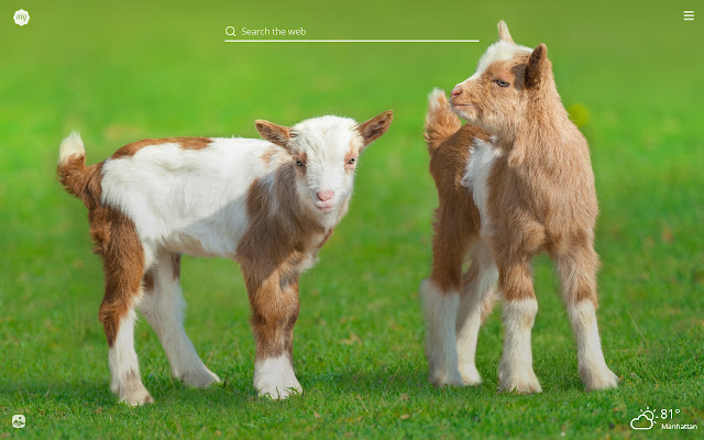 My Baby Goats HD Wallpapers New Tab Theme