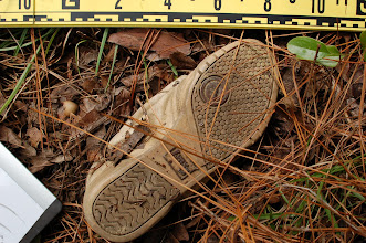 Photo: Shoe tracks are of forensic interest for a variety of reasons. A shoe should contain the wearer's DNA.