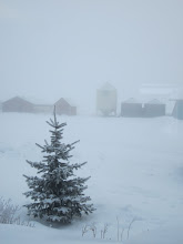 Photo: A foggy morning
