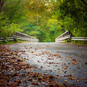 Fall Bridge by Virginia Folkman - Landscapes Forests ( fall, leaves, bridge, autumn )
