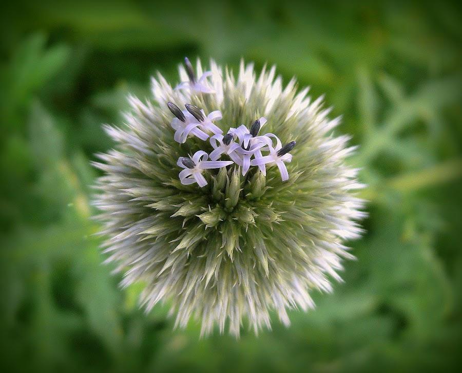 my world by Joaquim Machado - Nature Up Close Flowers - 2011-2013