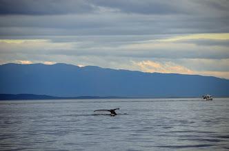 Photo: Humpback Whale - Day 3