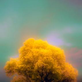 by Agung Cahyono - Landscapes Prairies, Meadows & Fields