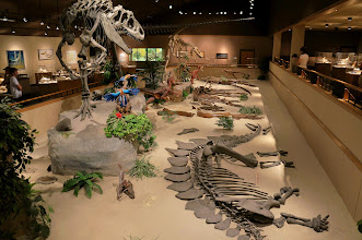 Photo: The mission of the Dakota Dinosaur Museum is to promote tourism by providing a facility for preservation and display of geological and paleontological specimens for public review and education.