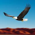 Bird Racing Simulator: Eagle Race Game icon