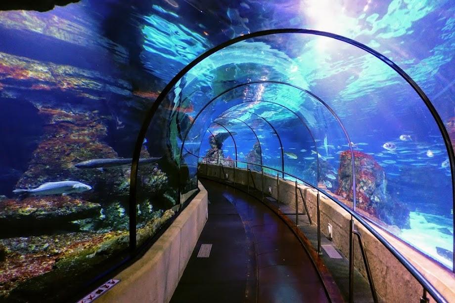 Foto Aquarium - El Acuario de Barcelona 12