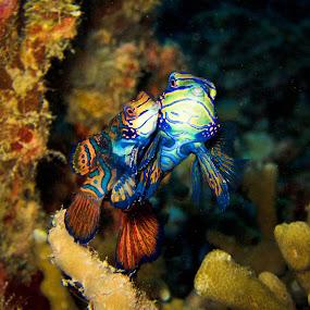 by Beth Panay - Animals Sea Creatures ( mandarin fish )