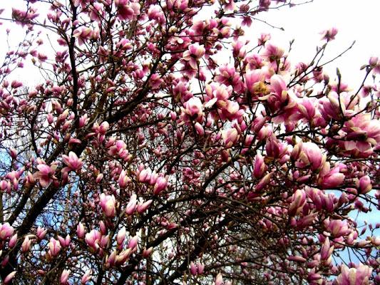Un tuffo nella primavera... di Serenella