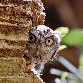 I See You by Donna Van Horn - Animals Birds ( palm tree, bird, screech owl, eyes,  )