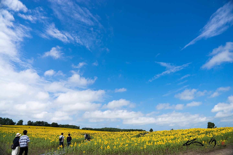 青空と白い雲と黄色のひまわりさんと。。。