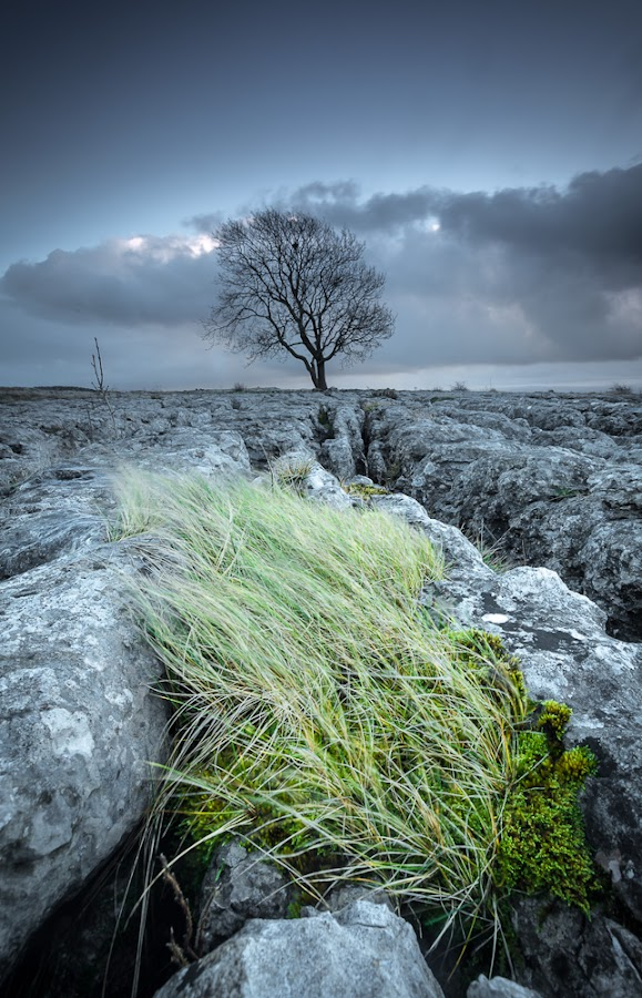 Green Patch by Adrian Wilson - Landscapes Prairies, Meadows & Fields ( ribblesdale, yorkshire, malham, yorkshire dales, sunshine, landscape, settle, airedale )