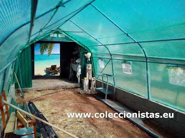 Coleccionistas.eu - Invernadero Vista interior