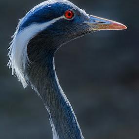 by Leo Ramli - Animals Birds (  )