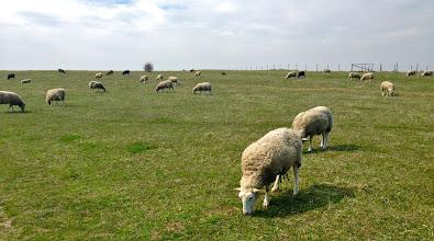 """Photo: """"...och där gick getterna och där gick fåren, som vita moln på ängens klorofyll..."""" /E Taube"""