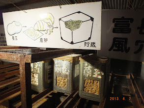 """Photo: In the """"wind cave"""" - deep underground, they were storing insect larvae.  Not sure why..."""