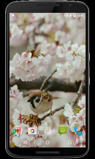 さくらと鳥は壁紙を生きます